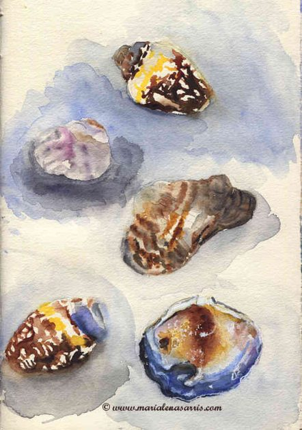 Tiny Shells Collection - Watercolour Sketch- Artist Marialena Sarris- August 2015
