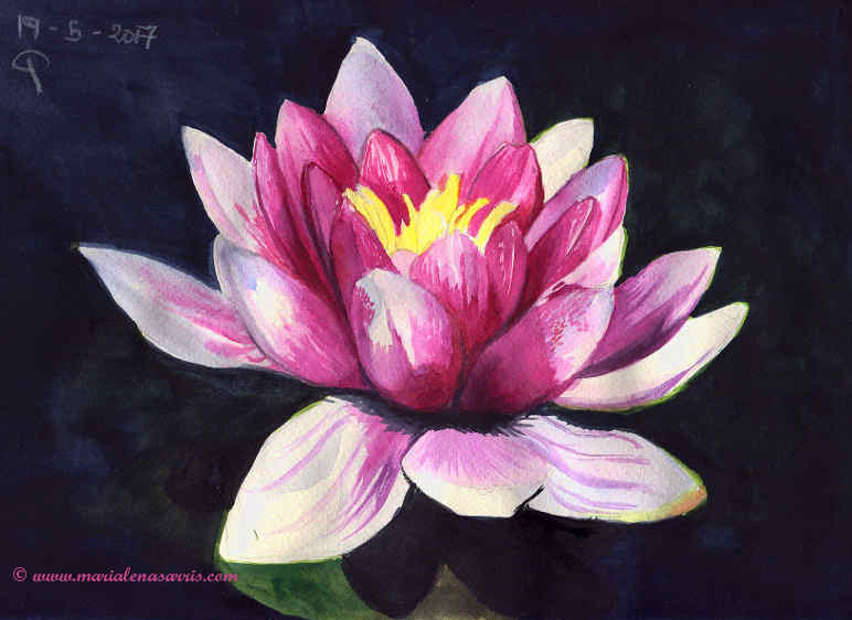 Waterlilly flower- Watercolour Botanical Sketch- Artist Marialena Sarris- © 19-5-2017