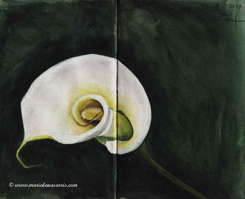 White LIly - Watercolour floral Sketch- Artist Marialena Sarris- ©12-3-2017