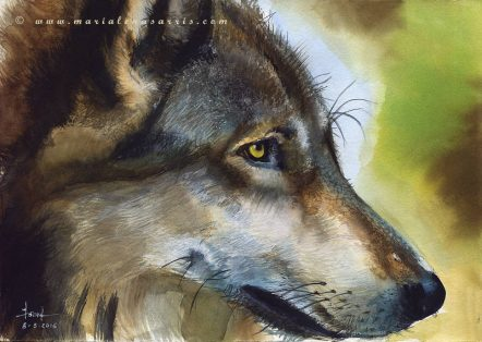 Wolf Wolf - Wild Life Watercolour Painting- © Artist Marialena Sarris-8-3-2016