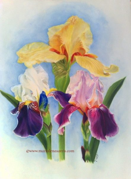 Irises- Watercolour Botanical Illustration- Artist Marialena Sarris.- 9-2018