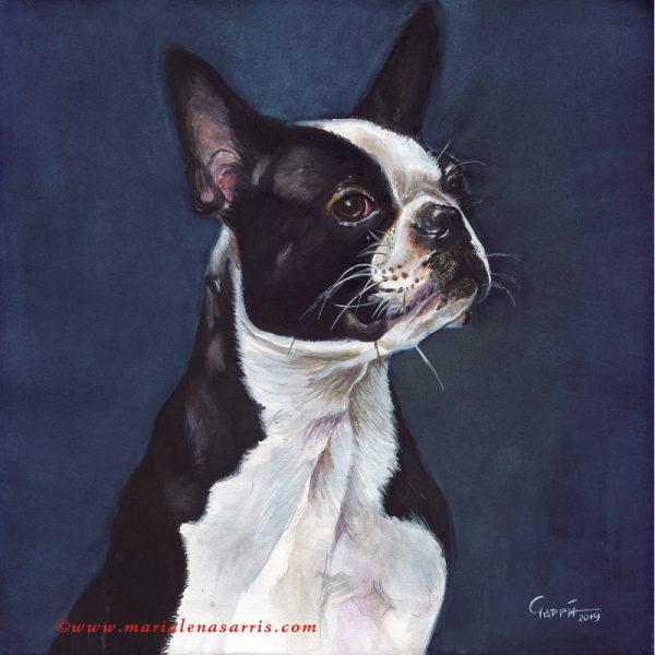 Boston Terrier pet watercolour portrait painting