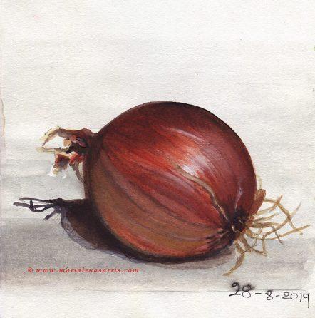 Onion Sketch- Watercolour Onion Sketch- © Marialena Sarris