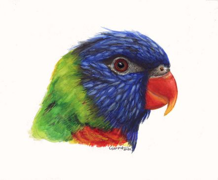 Lorikeet Parrot- Watercolour Painting-Commission- © Marialena Sarris 2020