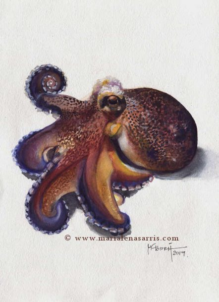 Octopus Watercolour Painting-© Marialena Sarris