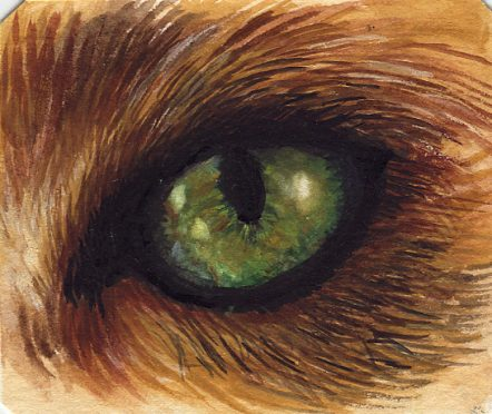 The Eye of the Tiger- Watercolour sketch on Hahnemuhle Mixed Media Paper.