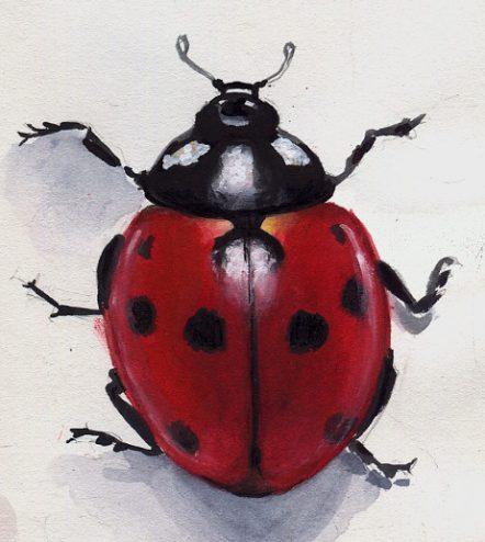 Ladybug sketch- Marialena Sarris