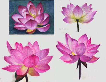 Some Lotus Flowers sketches- Marialena Sarris