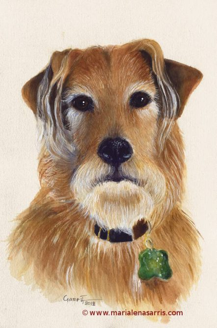 MacDuff- Watercolour Pet Portrat- © Marialena Sarris